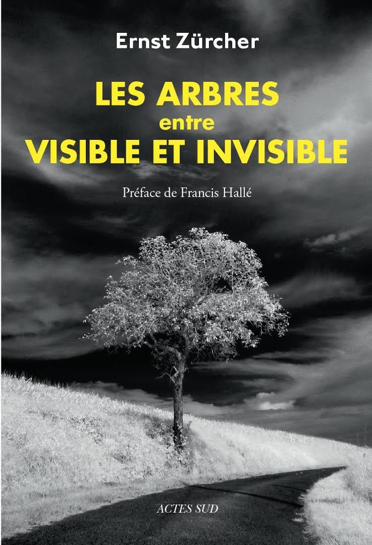 Les arbres, entre viible et invisible